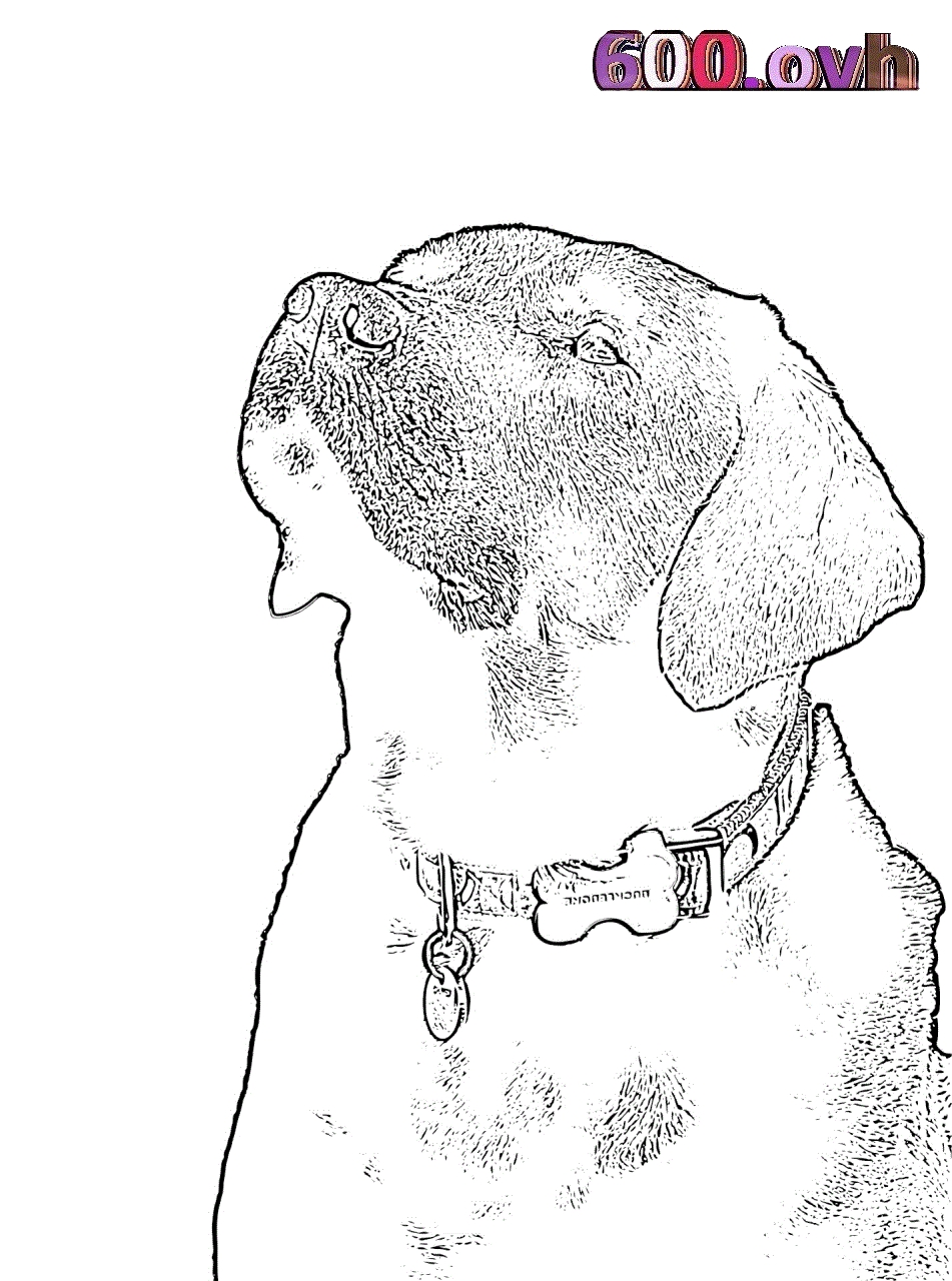 five nights at freddy coloring pages - labrador retriever kleurplaten