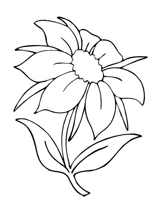 flower adult coloring pages - flowers coloring pages