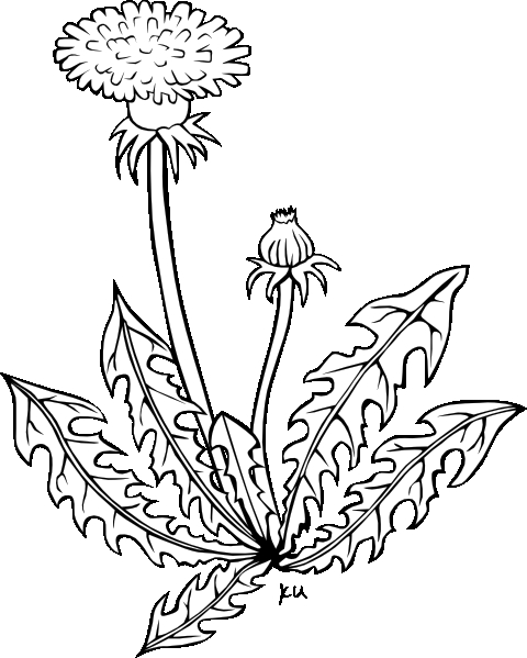 flower pot coloring page - clipart