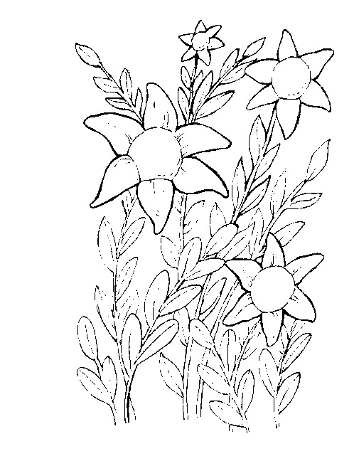 flower vase coloring pages - cvety