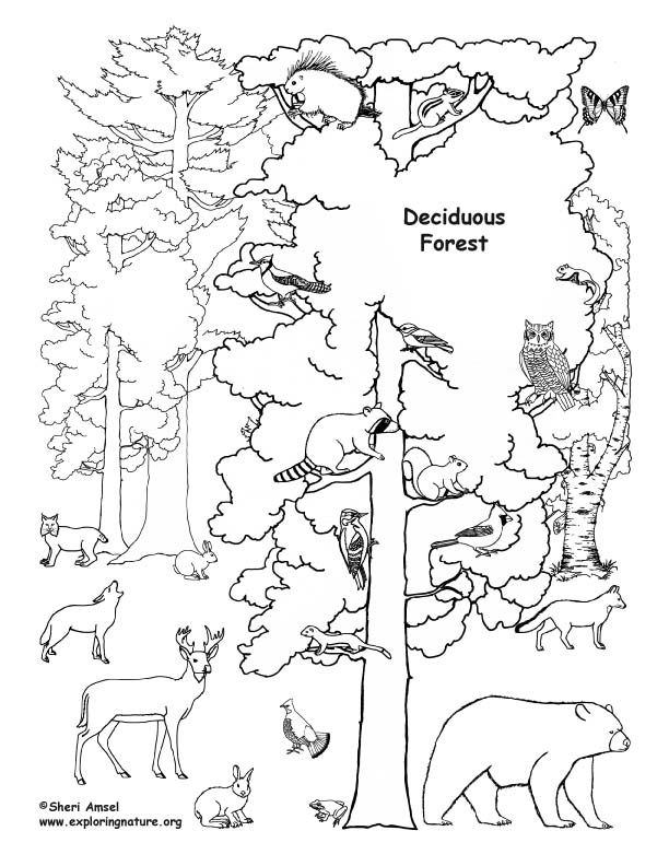 forest animals coloring pages - 4841