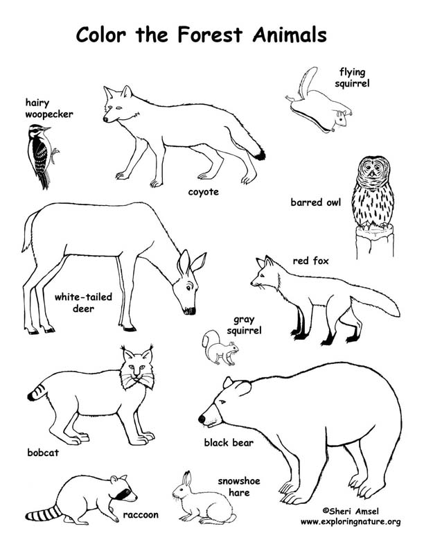 Forest Animals Coloring Pages - forest Animals Coloring Page