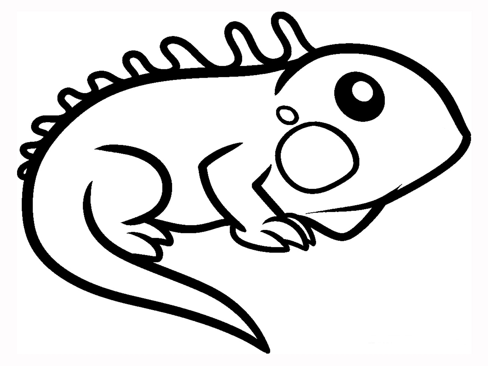 forest coloring pages - iguana facts and truth