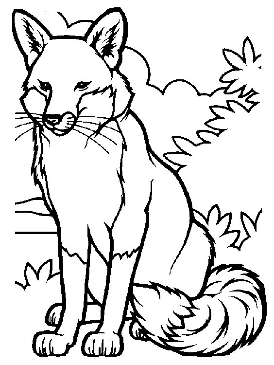 fox coloring pages - fox