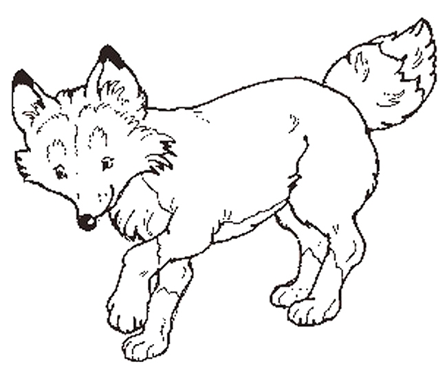 fox coloring pages - fox coloring pages to print