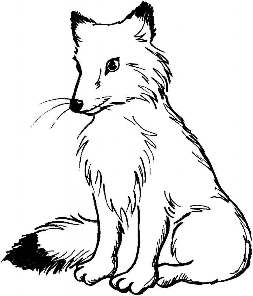 fox coloring pages - fox coloring pages