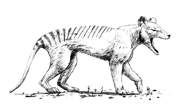 free adult coloring pages to print - thylacine coloring 01