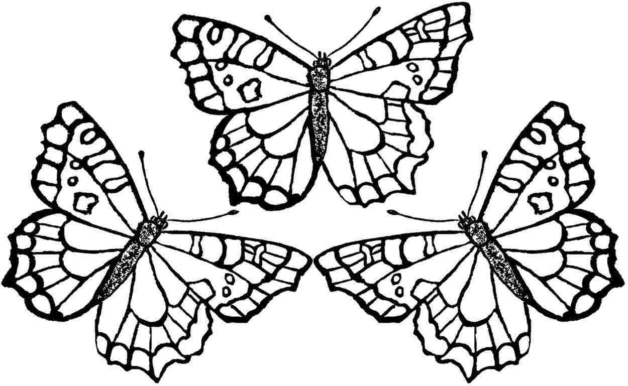 free coloring pages to print - butterfly coloring pages