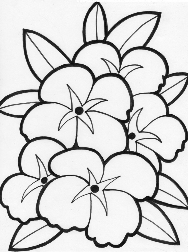 free flower coloring pages - flower patterns to color