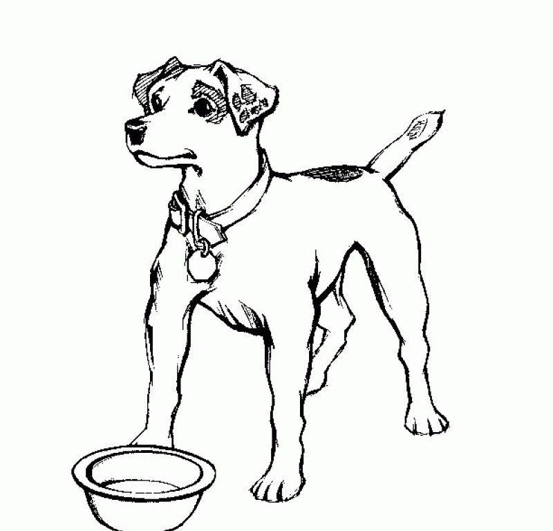 free online coloring pages for adults - realistic dog coloring pages