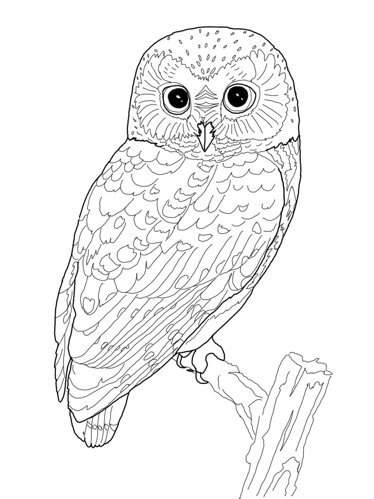 free owl coloring pages - owlcoloringpages