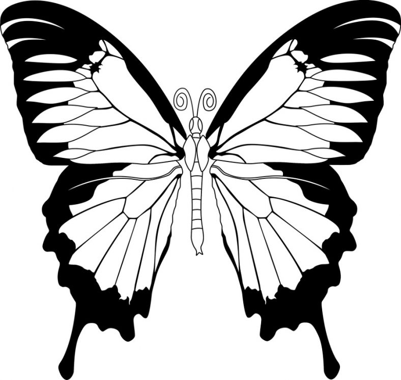 Free Printable butterfly Coloring Pages - butterfly Coloring Pages for Kids – Learning Printable