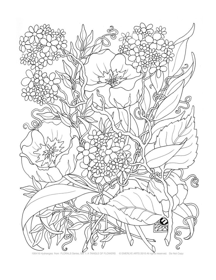free printable flower coloring pages for adults - coloring pages