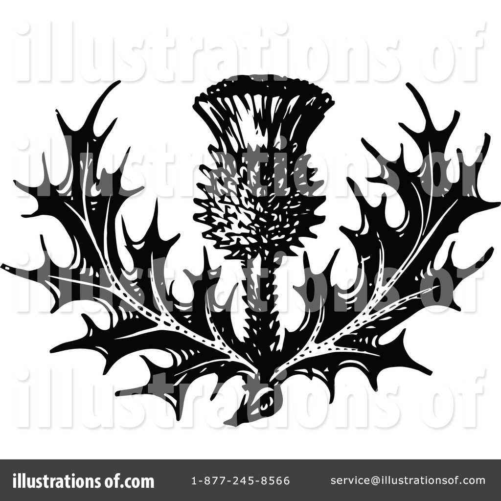 free printable flower coloring pages for adults - royalty free thistle clipart illustration