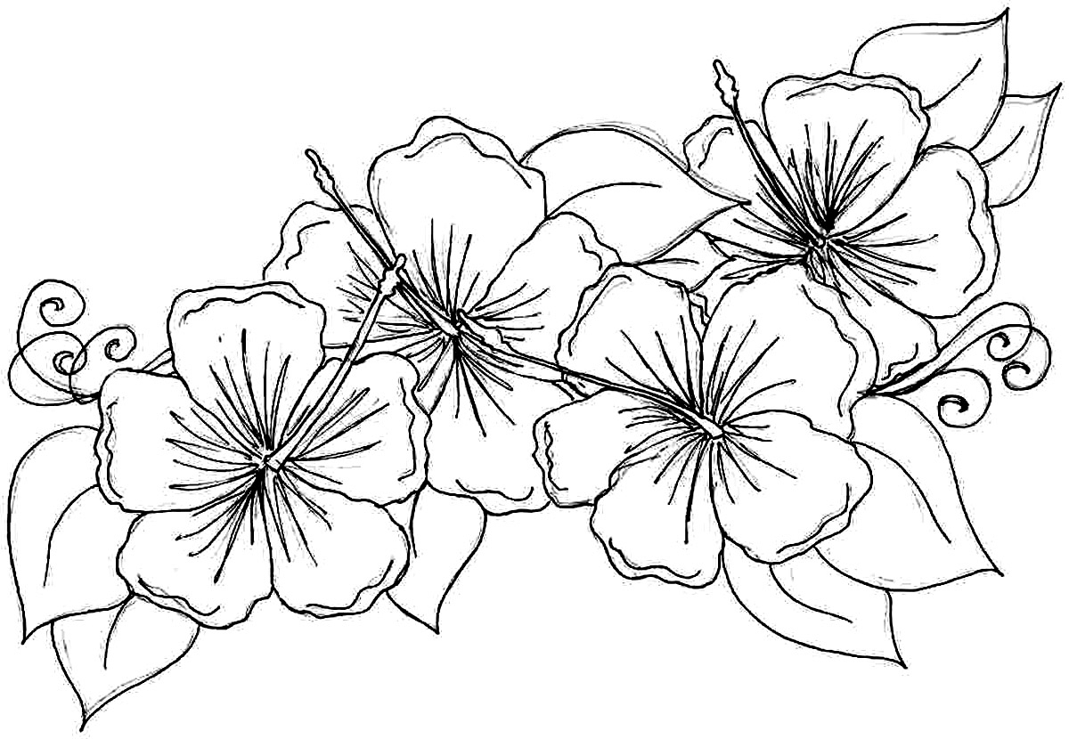 free printable flower coloring pages - hibiscus coloring pages