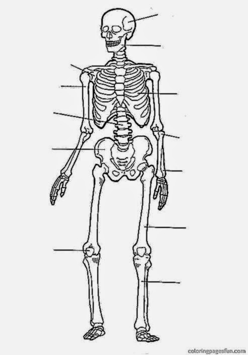 free printable human anatomy coloring pages - anatomy coloring sheets