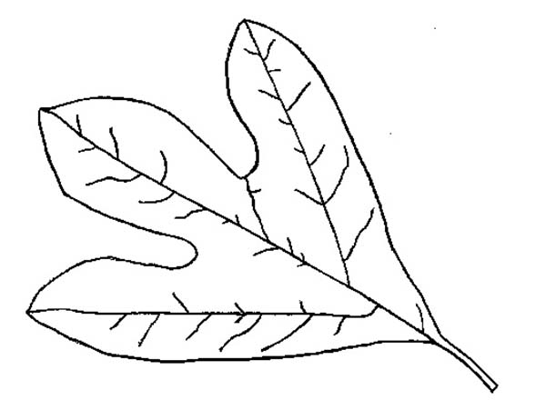 Free Printable Leaf Coloring Pages - Printable Leaf Coloring Pages