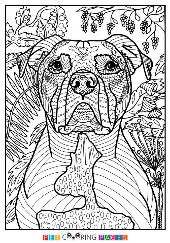 free printable mandala coloring pages for adults - summer coloring pages to print out for adults
