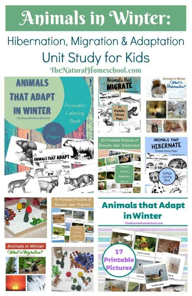 free spring coloring pages - animals in winter hibernation migration and adaptation unit study for kids