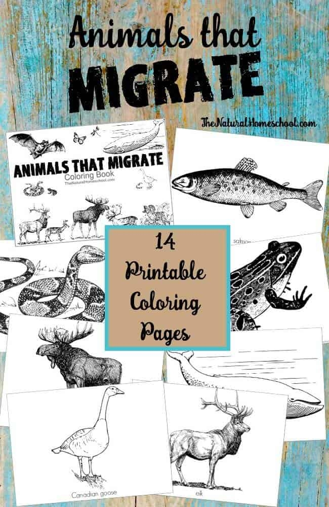 free spring coloring pages - animals that migrate in winter printable coloring book