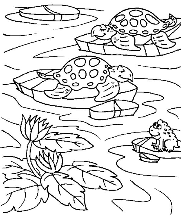 free swear word coloring pages - sea turtle in a ponds with a frog coloring page