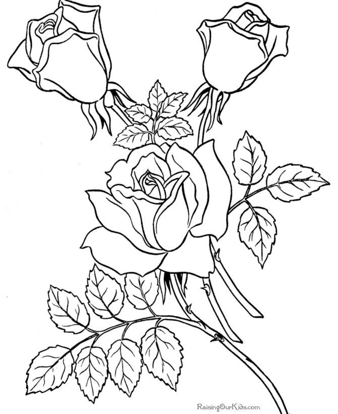 fun coloring pages for adults - fun coloring pages for adults