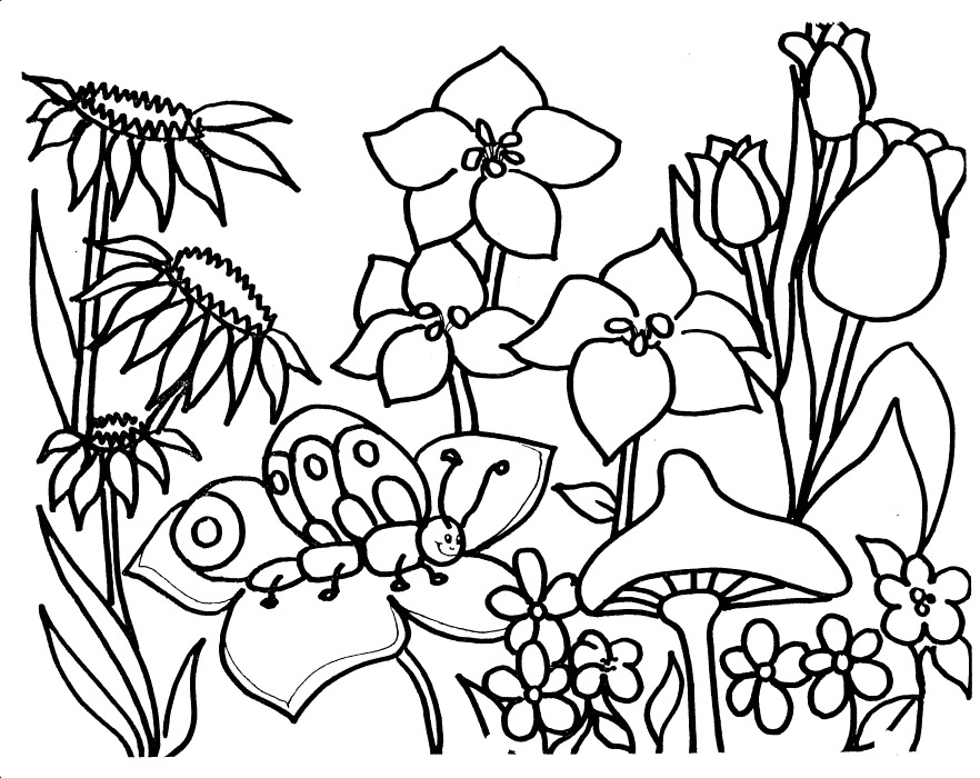garden coloring pages - garden coloring pictures