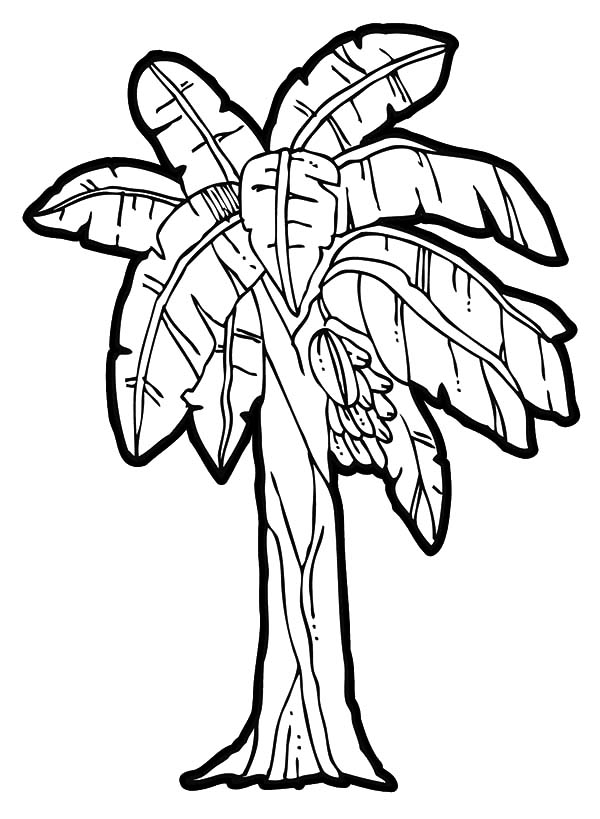 garden of eden coloring pages - banana tree coloring