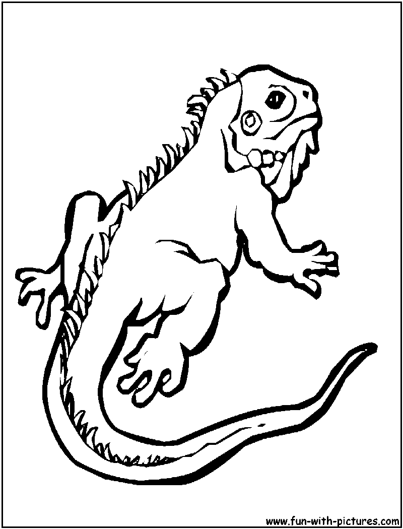 gecko coloring page - gecko