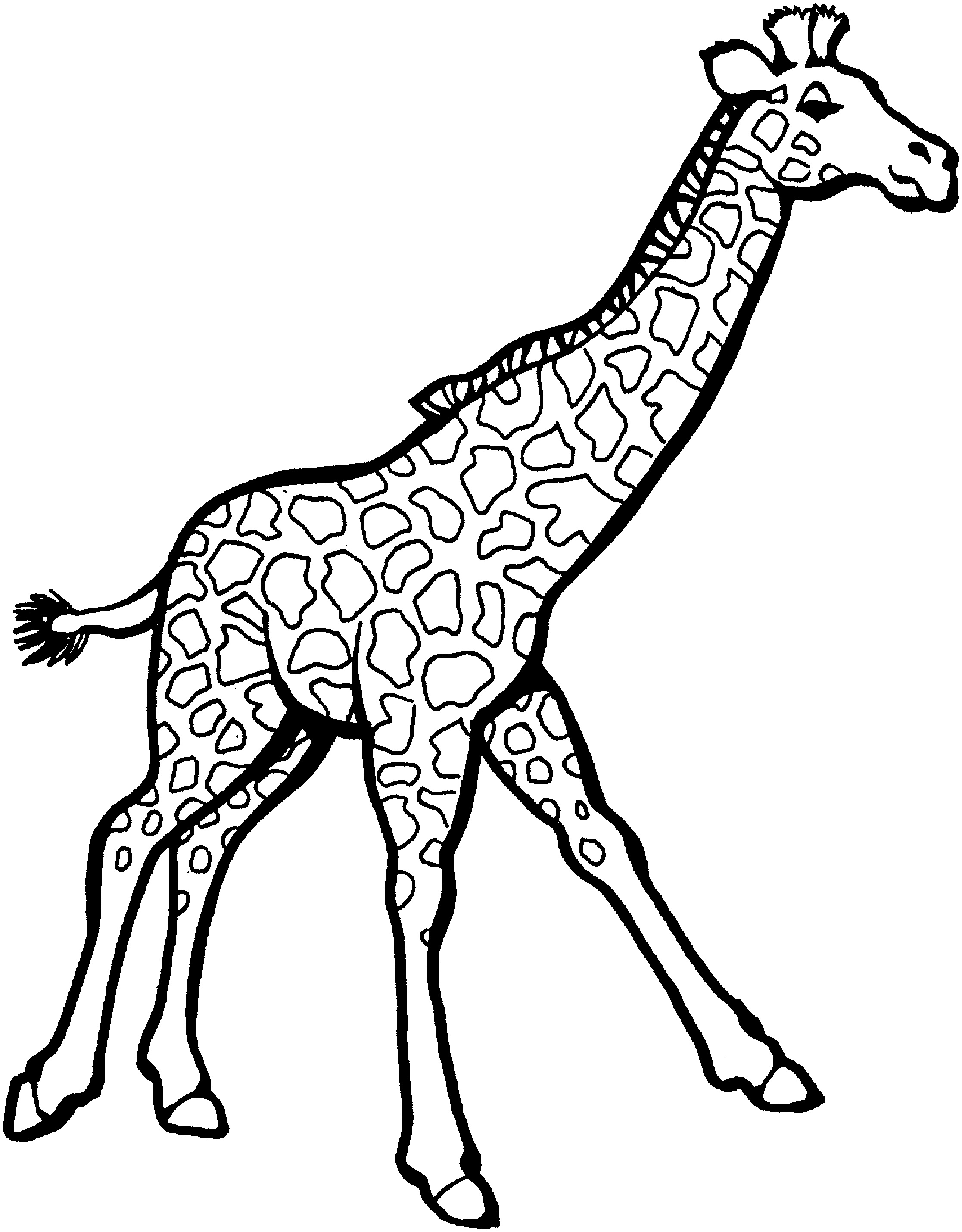 giraffe coloring pages - giraffe coloring pages for adults sketch templates
