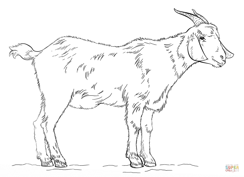 Goat Coloring Pages - Billy Goat Coloring Page Az Coloring Pages