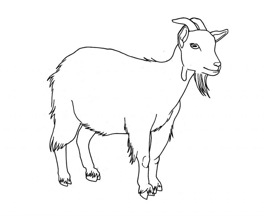 goat coloring pages - goat coloring pages