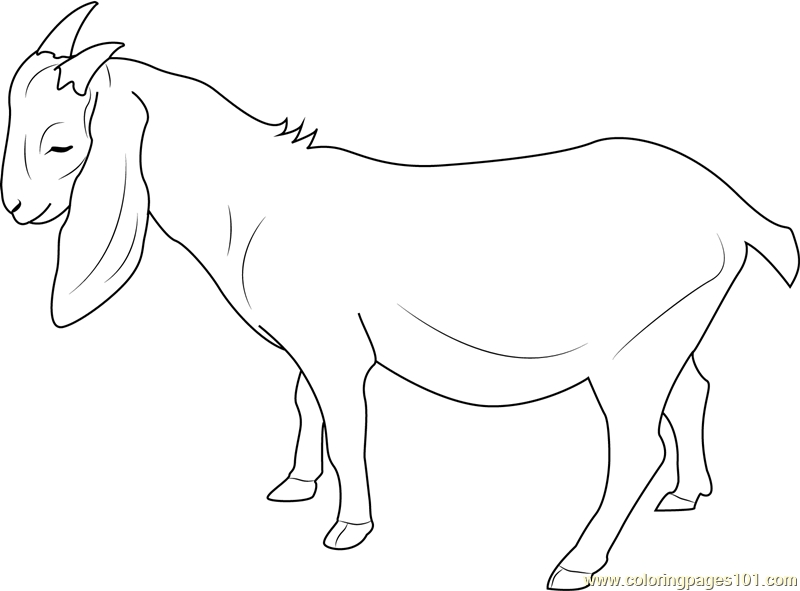 20 Goat Coloring Pages Selection Free Coloring Pages Part 2
