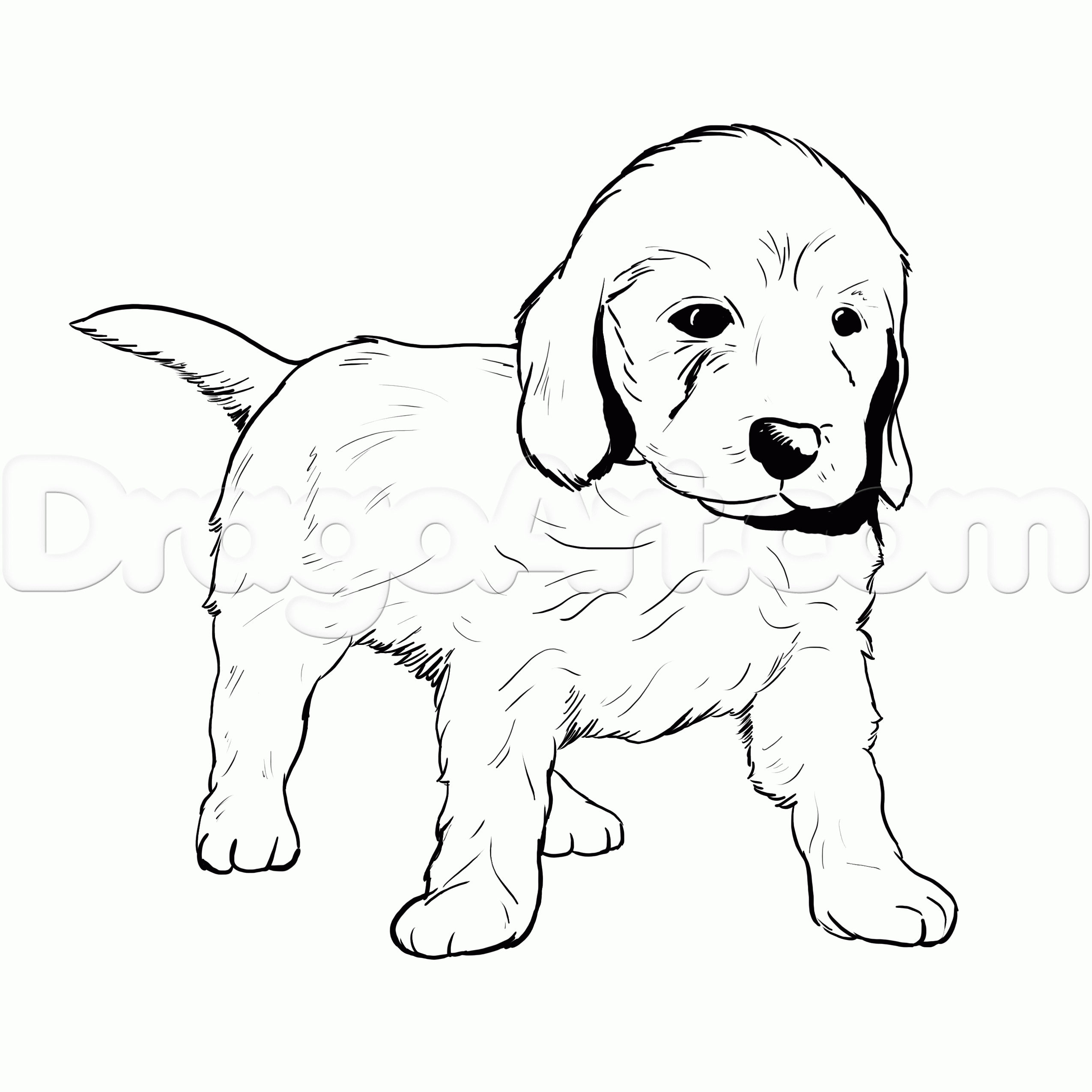 Golden Retriever Coloring Page - Golden Retriever Clip Art Black and White Sketch Coloring Page