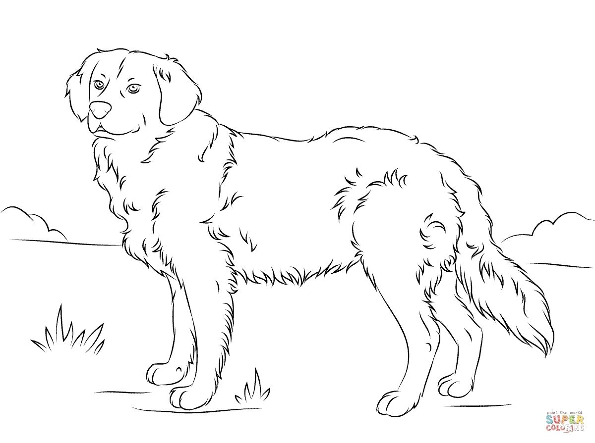 golden retriever coloring page - golden retriever coloring pages
