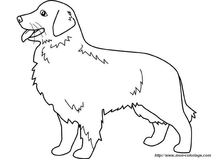 golden retriever coloring page - golden retriever puppy coloring pages sketch templates