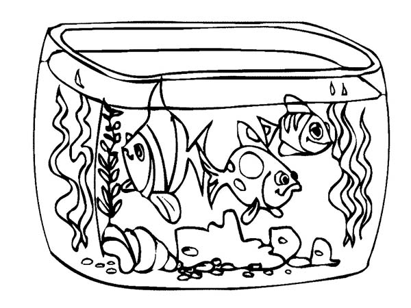 goldfish coloring page - how to draw fish tank coloring page