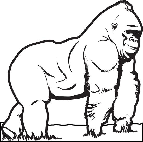 Gorilla Coloring Pages - Free Printable Gorilla Coloring Page for Kids