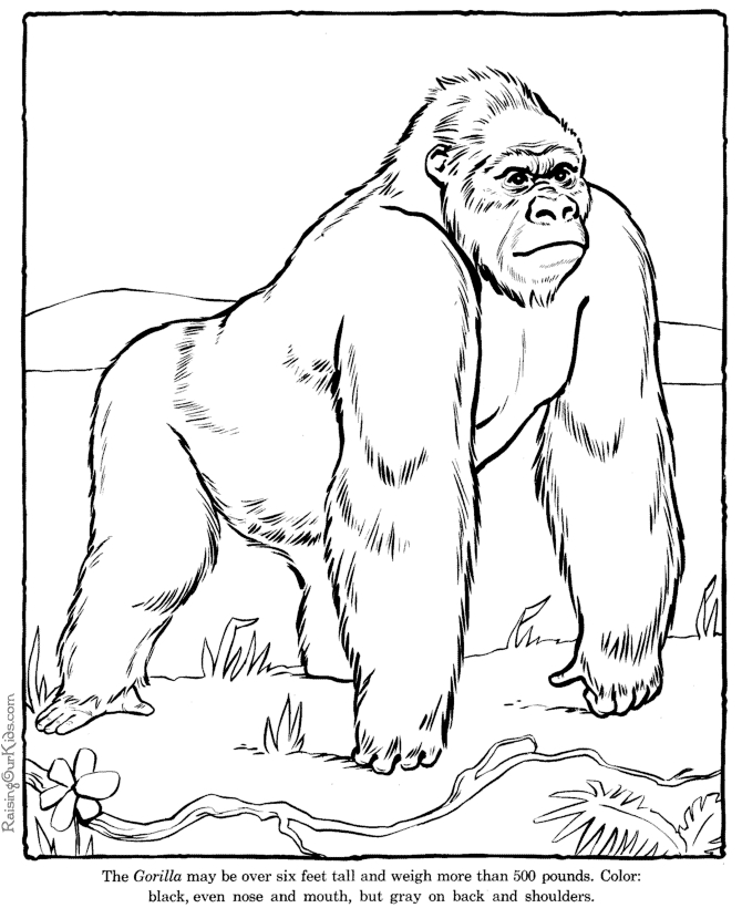 gorilla coloring pages - 002 gorilla coloring page