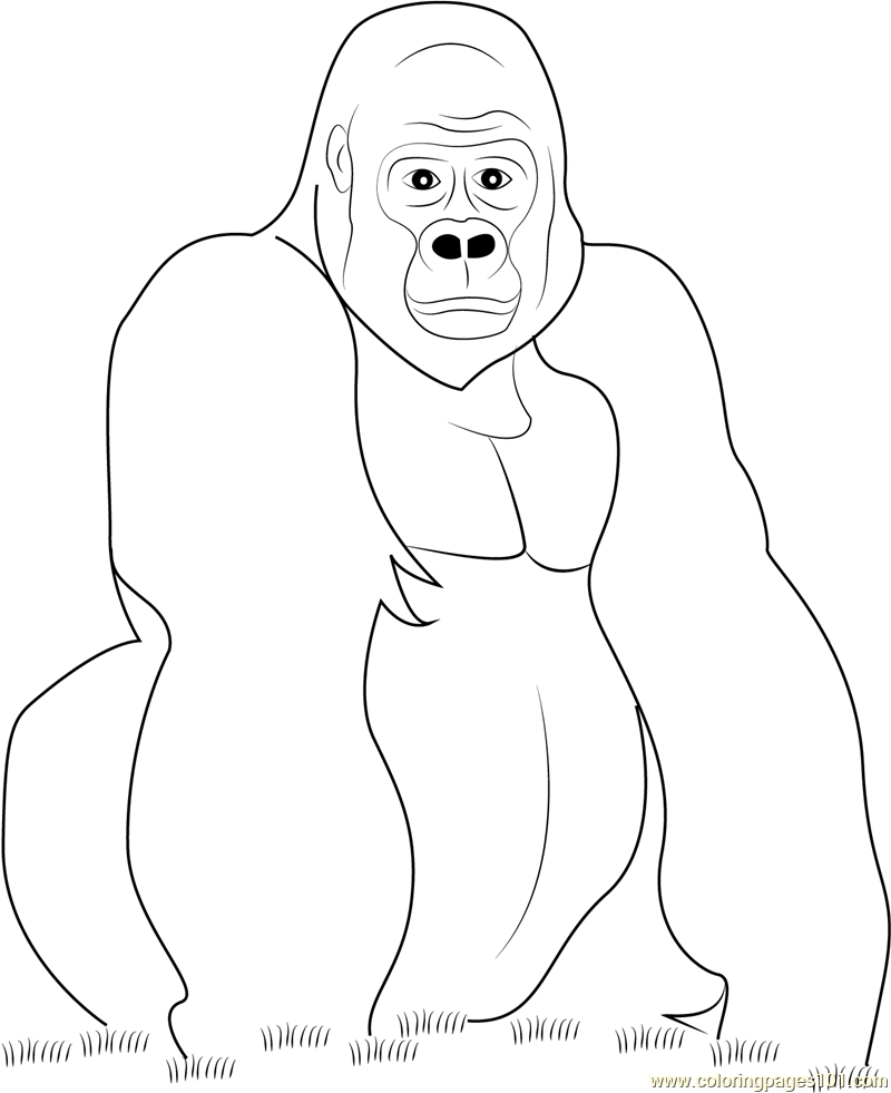 25 Gorilla Coloring Pages Images