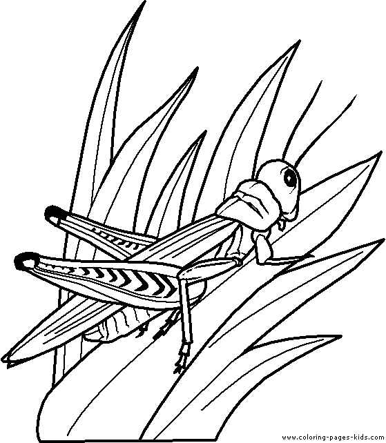grasshopper coloring page - cute coloring page grasshopper sketch templates