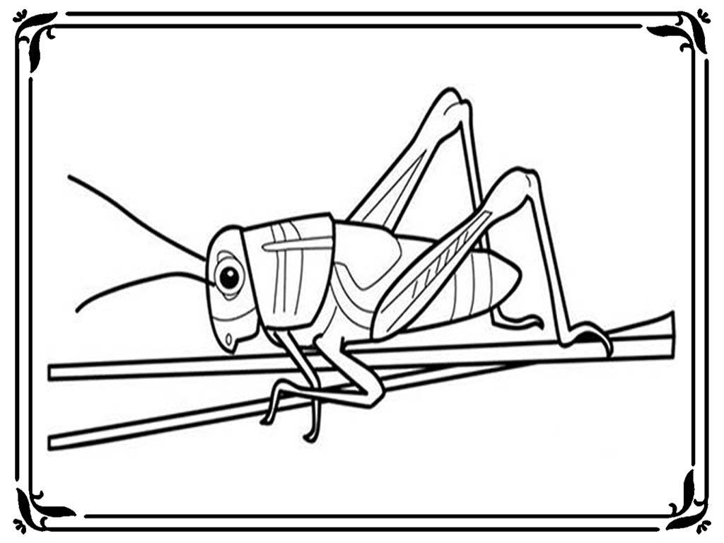 Unique Grasshopper Coloring Pages Ornament - Framing Coloring Pages ...