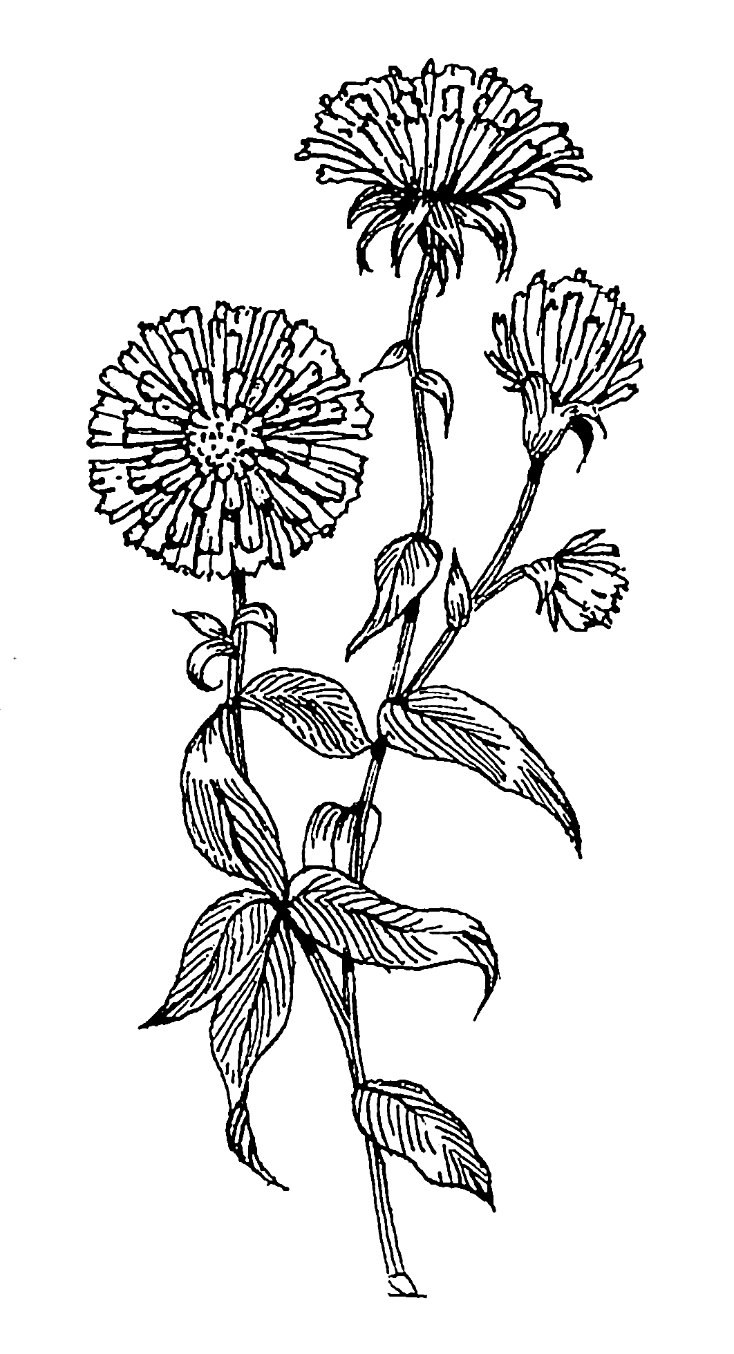 grayscale coloring pages - File Aster PSF