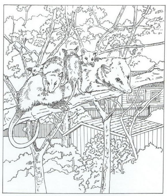 grayscale coloring pages - 334