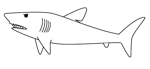 great white shark coloring pages - coloring shark