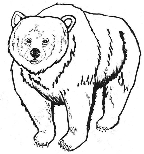 grizzly bear coloring page - bear coloring pages