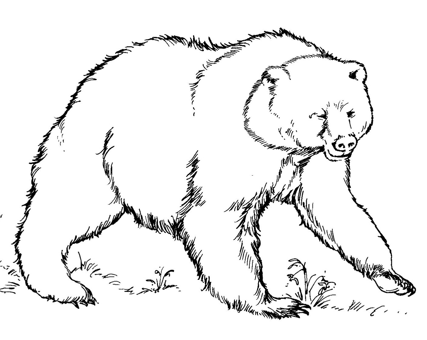 grizzly bear coloring page - grizzly bear coloring page printable sketch templates