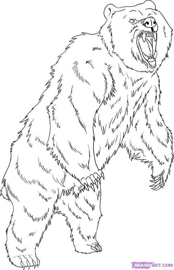 grizzly bear coloring page -