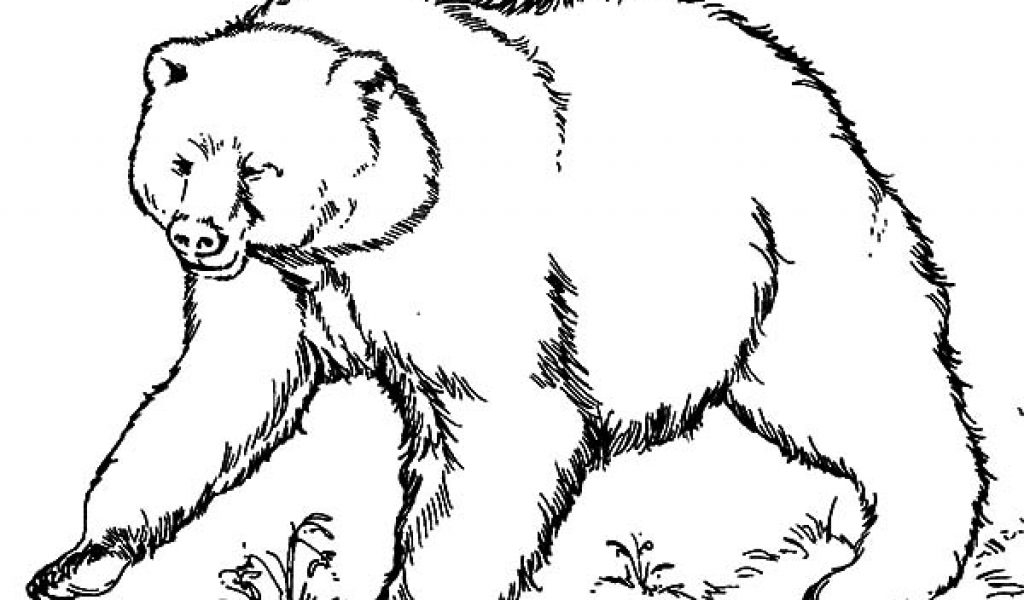 grizzly bear coloring page - free background coloring grizzly bear coloring pages for pencil sketch of grizzly bear coloring pages free printable