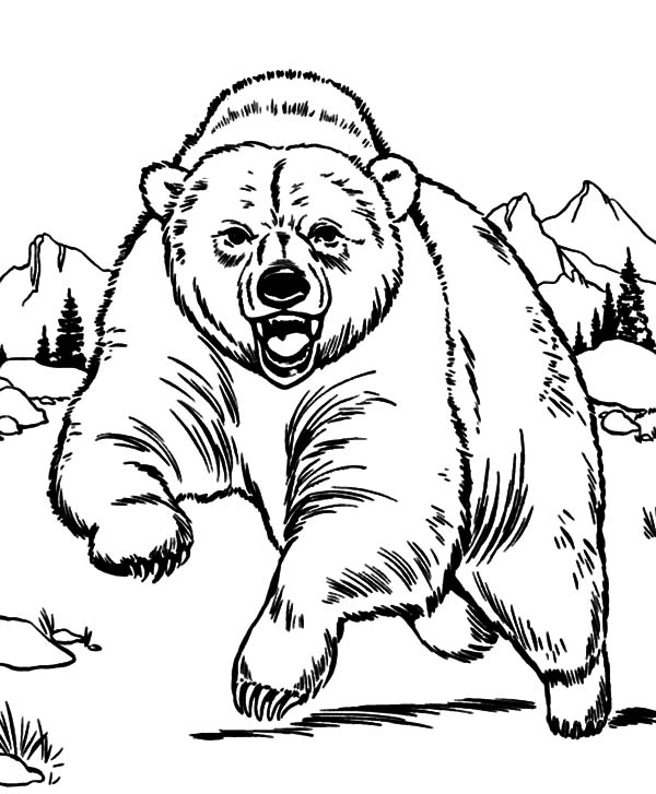 grizzly bear coloring page - mobile coloring grizzly bear coloring pages for grizzly bear coloring page free printable coloring pages